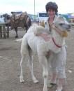 Так, белый конь уже есть. Осталось найти принца:))