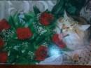 кошка Соня,любит цветы