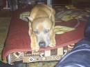 Друг моей собаки.