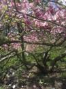 Магнолии в ботаническом саду