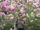 магнолии цветут :)