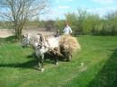 вот и весна..... и в селе.... первый раз в жизни на лошадке :)