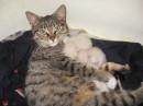 наша кошка. первые котята. май 2008