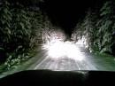 ночь лес!
