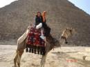 самый гордый верблюд в мире