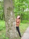 мавПа лісова