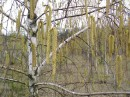апрель 2008