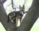 Майо собако.....младшойе
