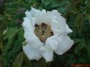 цветок с Ботанического сада