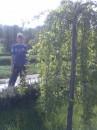 Я и деревце