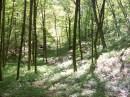 гулял в лесу