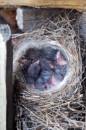 Воробей - птица гордая :)