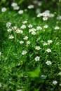 Мох тоже цветет :)