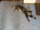 Мой кот!!!!!!!!!!!