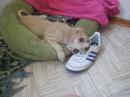 :-( Когда-то это были любимые кросовки....до того как собаку не привел в дом:-)
