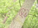 Любовь оставляет следы