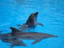 "Дельфинарий ""Немо""."