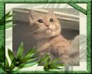 Портрет весеннего кота