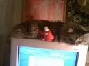 хранитель экрана...  кошка:) Шкода:) люблю