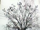 Дерево с птицами но птиц не видно
