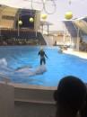 на представлении в дельфинарии))))