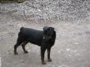 мой любимый пёсик!!!