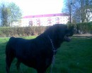 Познакомьтесь, это Лёня) Мой щеночек)) Которому 1 год)