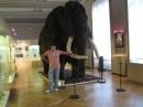 Прага.Народний музей.
