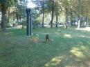 собаки гуляют. Крещатый парк