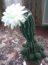 мої квіти