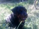 моя любимая собака