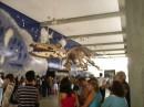 Динозавр,подвешеный перед входом в океанариум.Сделан из...использованых сплюснутых банок..(Спрайт,Кока-Кола и др.)