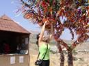 Дерево желаний:)