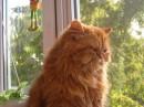 все кошки ... как кошки ....... а я - КОРОЛЕВА !