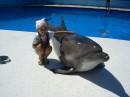 А дельфины добрые, а дельфины мокрые, смотрят на меня умными глазами.....