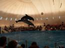 Дельфины жгут.