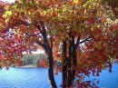 никогда не любила осень... а тут это самое красивое время года! +23-эт для меня=)) Все 2,5 езды до коттеджа осенние неповторимые краски создавали удивительное настроение! 12.10.2008 Это деревце растёт рядом с крылечком