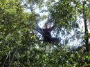 я в отпуске.. сижу на своей родненькой яблоне...16 10 2008