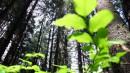 Когда деревья были высокими..