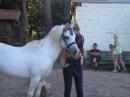 Батоха, уэльский пони)))