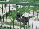 А вот этот мишка, несколькими днями ранее моего посещения зоопарка, растерзал женщину, которая свалилась к нему в вольер (об этом передавли в новостях по всей Польше)