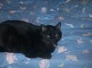 мой кот=)))