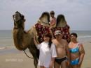 На море с родителями и племяшей, верблюд Техас