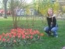 Люблю тюльпаны..