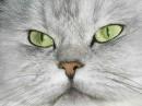это мой любимый кот Фунтик =0)