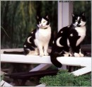 Вот это тюнинг для котов)))))))))