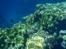 Коралловый риф во всей красе