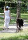 Если бы у теленка сзади болталси только хвост обозвал бы работу (Две Грации..) а так не иначе как...?