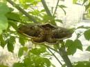 Ночная бабочка..