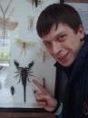 королевский скорпион